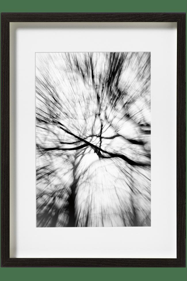 Des branches donnant l'impression de tomber au sol dans un effet de zooming.