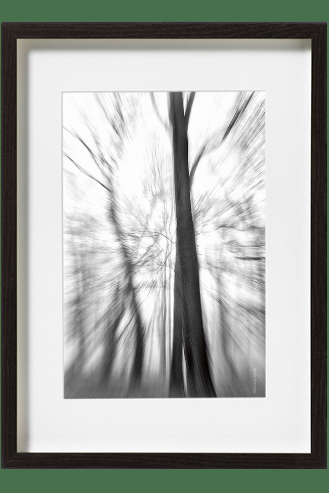 Des arbres embrumés donne l'impression de danser à perte de vue dans mouvement de zooming.