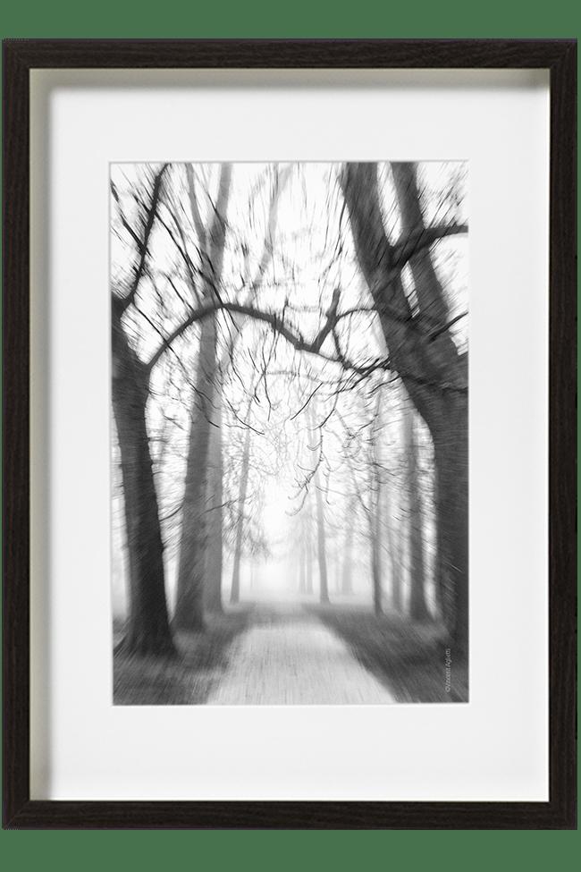 Des arbres au bord d'une allée embrumée donne l'impression de s'écarter à perte de vue.
