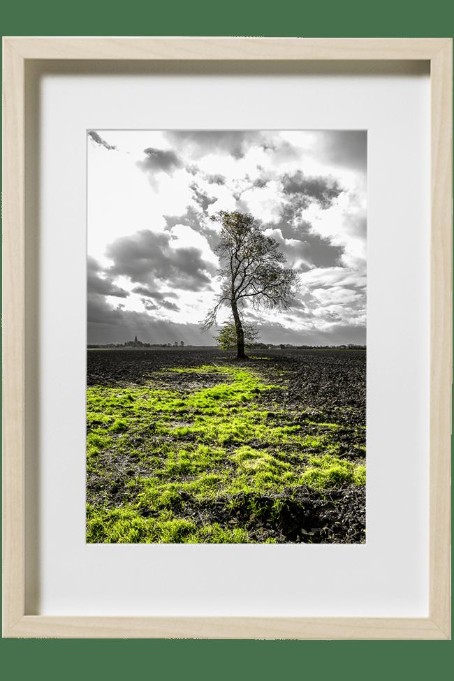 Un arbre nu au milieu d'un champ labouré. Au fond un clocher, l'hiver est proche.