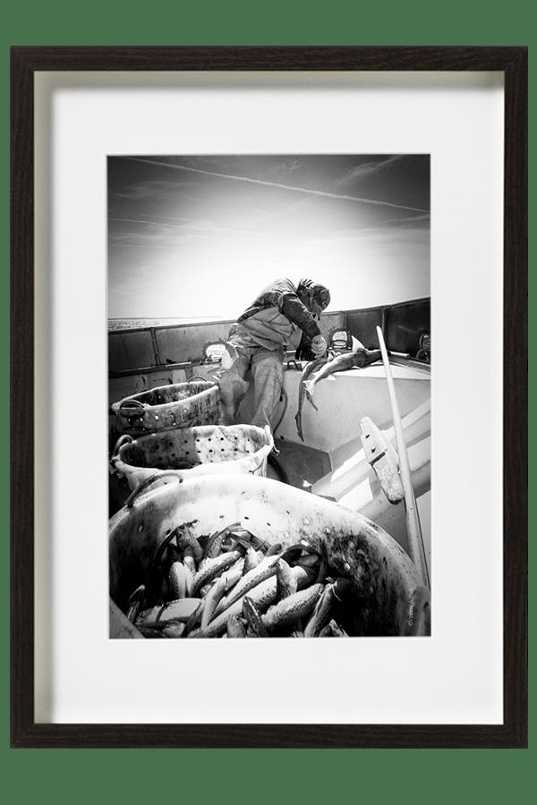 Arnaud marin pêcheur vide et prépare le poisson avant de le livrer à la criée du port. La pêche a été maigre.