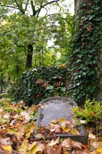 Cette pierre tombale recouverte de feuille d'automne offre un graphisme et une poésie qui nous fait oubliée que nous sommes dans un cimetière.