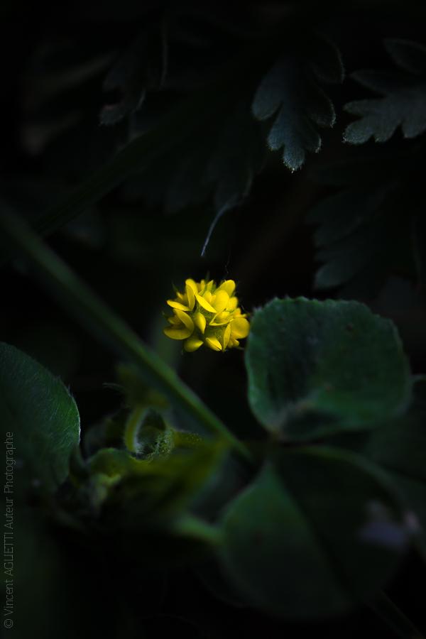 Petite fleur jaune mettant en lumière ces pétales dans une ambiance tropicale.