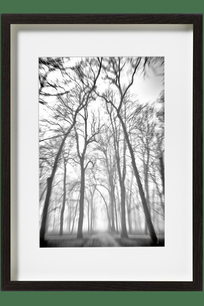 Des arbres centenaires bordant une allée embrumée tutoient les nuages.