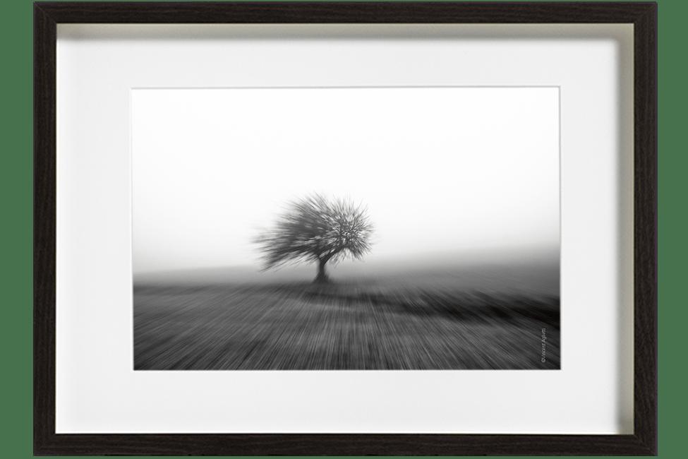 Un petit arbre dans la brume au milieu d'un champ, donnant l'impression d'avoir été coiffé par l'effet de zooming du photographe.