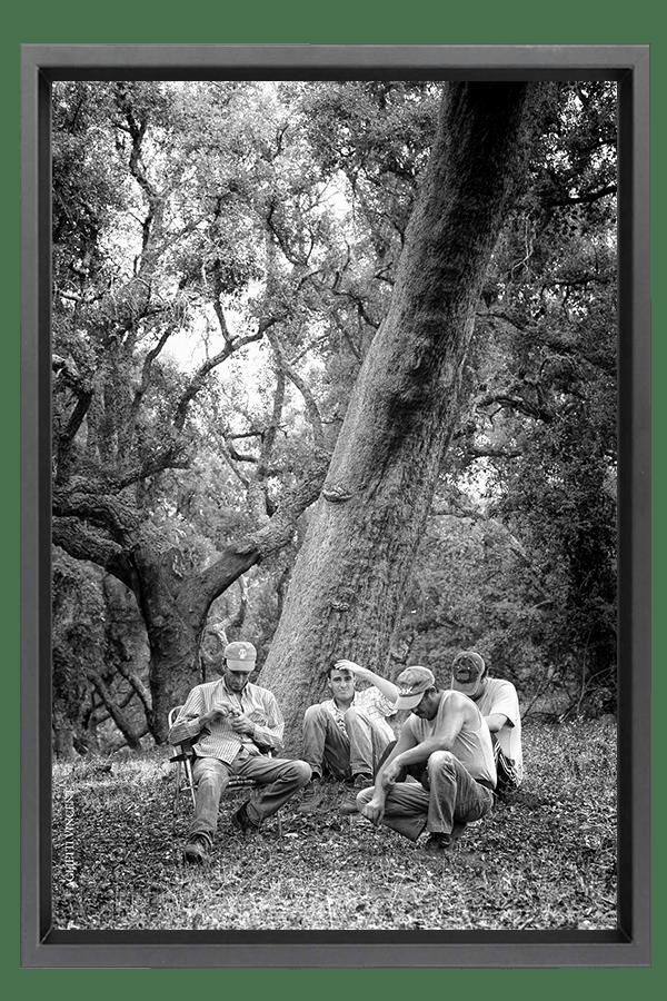 Sous le chêne liège centenaire, le conseil des anciens vendangeurs au nouveau venu.