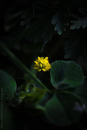 Petite Fleur. jaune mettant en lumière ses pétales dans une ambiance tropicale.