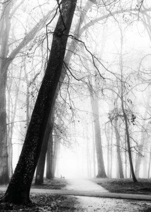 Galerie Brume de Bourgogne, Des arbres centenaires dans le parc de la Colombière.