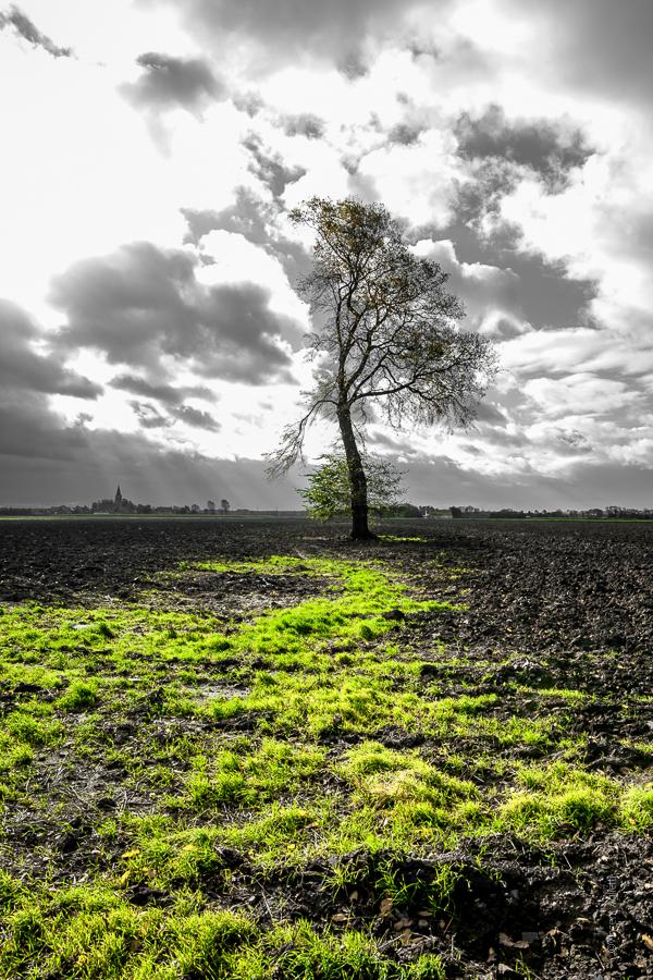 Un arbre dénudé au milieu d'un champs maltraité par le vent du Nord.