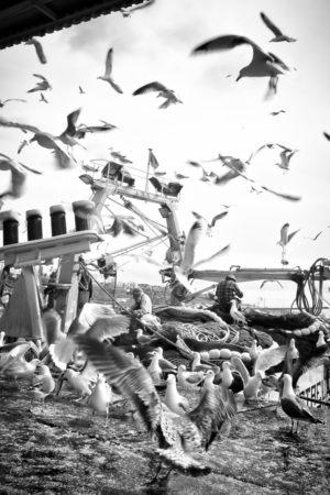 Le Bal Des Oiseaux. Les pêcheurs de Sinés reprisent leurs filets.