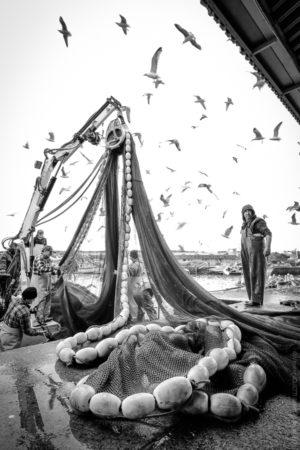 Collier de Pêche. A Sinès au Portugal les bateaux vident leur pêche