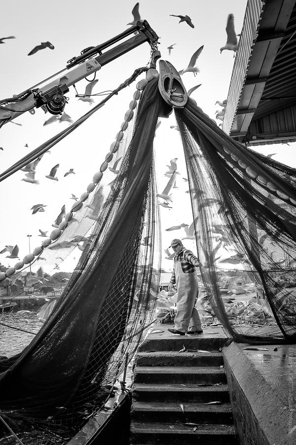 Rideau de Pêche. Les pêcheurs rentrent les filets sur le bateau.