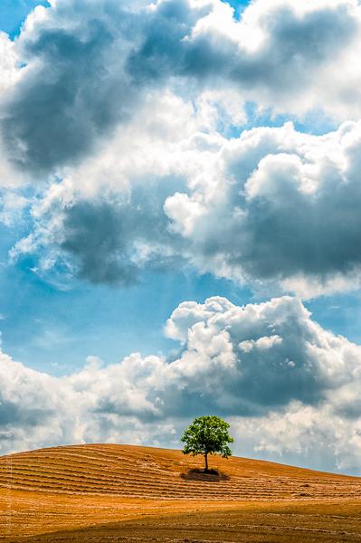 Planté Là. Un arbre dans un champ de l'Aude sous un ciel d'été.