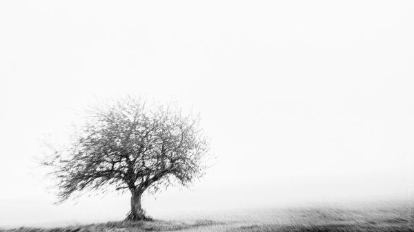 Petit Gevrey. Dans l'hiver matinal de Gevrey, un arbre frissonnant dans son champ.
