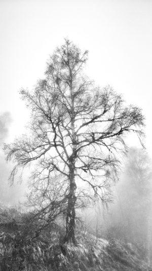 L'Auxois. Dans la brume certaines formes nous surprennent.