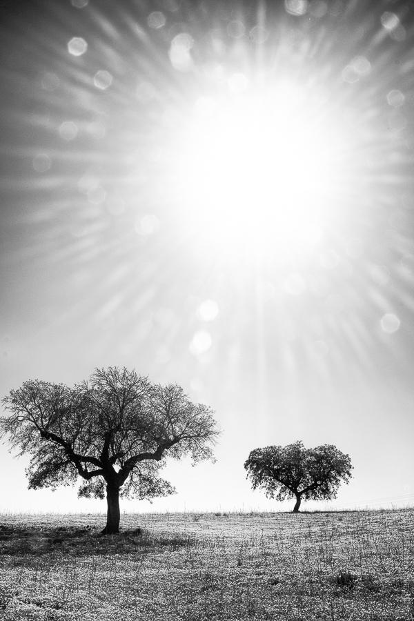 Plein Soleil. A une heure ou la sieste s'impose, les paysages de l'Alentejo font le show.